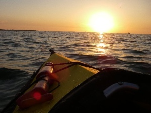 Photo Courtesy Ron Ellard, Estero Bay, FL