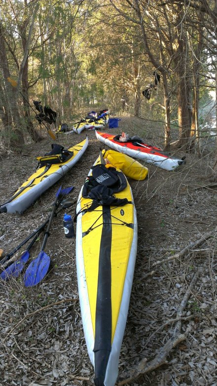 Camping in Francis Marion Forest